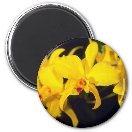 yellow Cattleya flowers Refrigerator Magnets