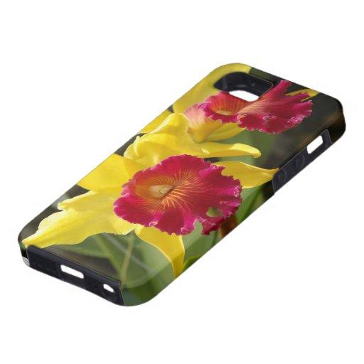 Yellow Cattleya iPhone 5 Covers
