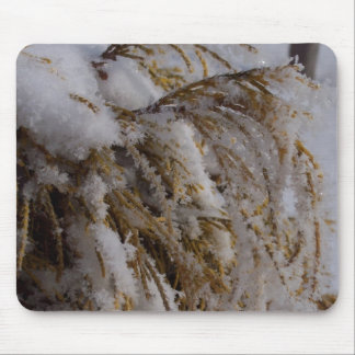 Yellow cedar with hoarfrost mouse mats