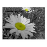yellow center daisy, Thinking of You! Postcard
