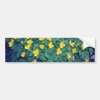 yellow Chelidonium Japonicum flowers Bumper Stickers
