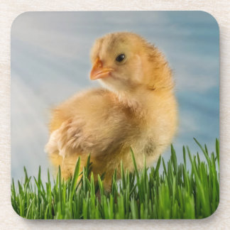 Yellow Chick in Grass Photo Drink Coasters