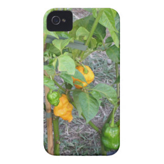 Yellow chili peppers iPhone 4 case