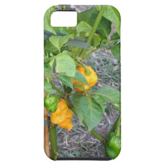 Yellow chili peppers iPhone SE/5/5s case