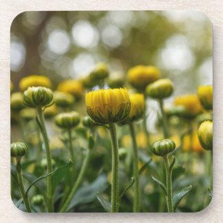Yellow Chrysanthemum Flower Buds Plastic Coasters