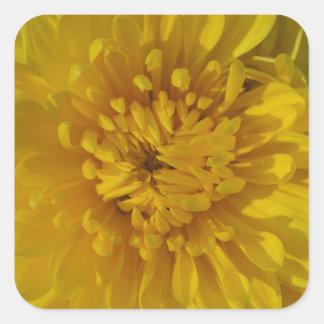 Yellow Chrysanthemum Flower Square Stickers