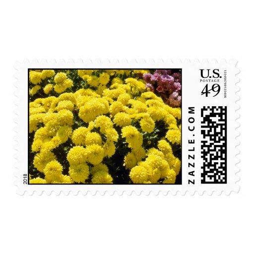 yellow Chrysanthemums flowers Postage