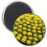 yellow Chrysanthemums in Japanese garden, Japan fl Refrigerator Magnets