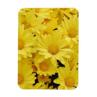 Yellow Chrysanthemums  Premium Magnet Rectangle Magnets