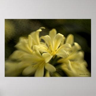 Yellow Clivia Poster