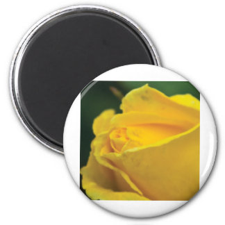 Yellow closed rose magnet