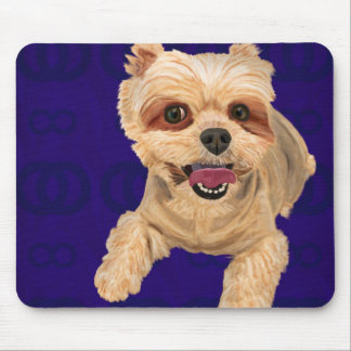 Yellow Coat Mixed Maltese on Blue Background Mouse Pad