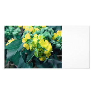 yellow colorized flowers with bee photo card