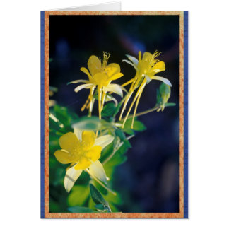 Yellow Columbine. Card