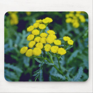yellow Common Tansy (Tanacetum Vulgare Tanaisie) f Mouse Pad