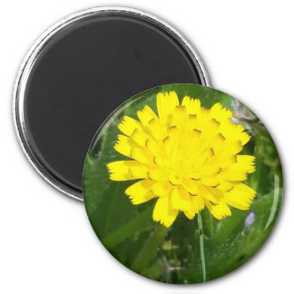 Yellow composite flower in grass on magnet