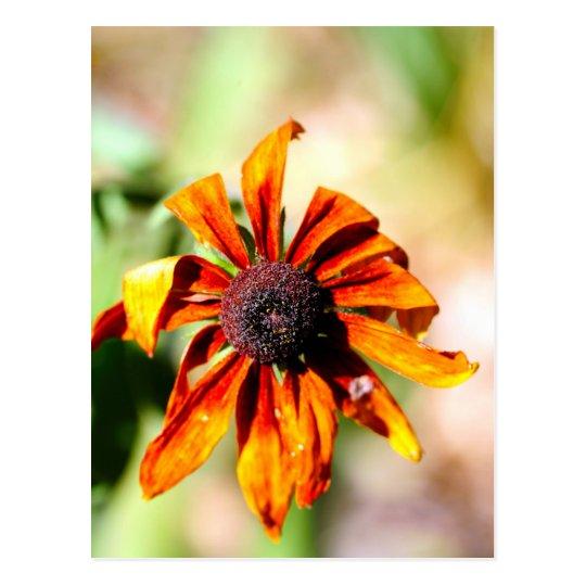 Yellow coneflower, or black-eyed-Susan Postcard