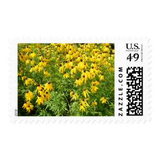 Yellow Coneflower Postage Stamps