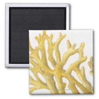 Yellow Coral Magnet