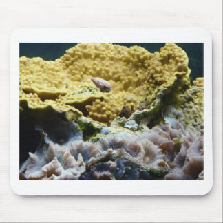 yellow coral mouse pad