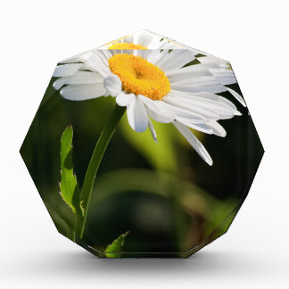 Yellow core daisy in front of a natural green acrylic award