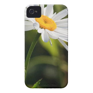 Yellow core daisy in front of a natural green iPhone 4 cover