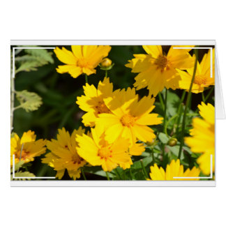 Yellow Coreopsis Card