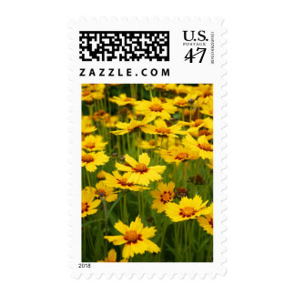 Yellow Coreopsis Field Postage