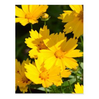 Yellow Coreopsis Postcard