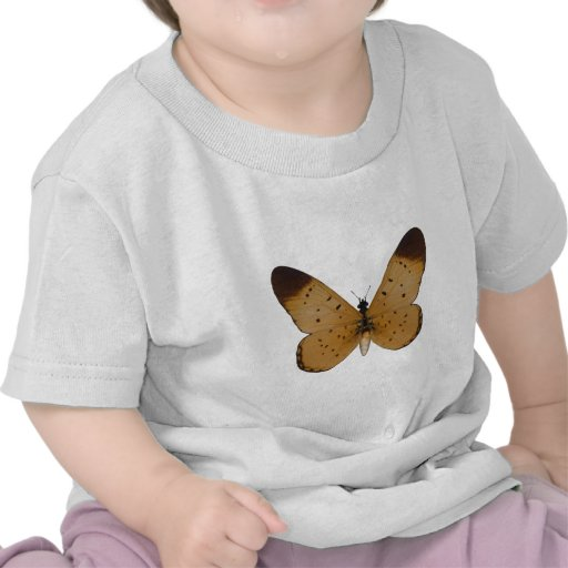 Yellow Coster Butterfly Shirts