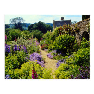 Yellow Cotswold garden flowers Postcard