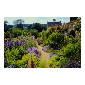 Yellow Cotswold garden flowers Poster