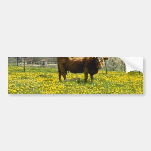 yellow Cow and dandelions, Marcilhac-sur-Cele, Fra Car Bumper Sticker