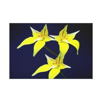 Yellow Cowslip Australian Orchid Flower Canvas
