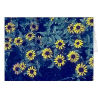 yellow Creeping Zinia (Sanvitlia Procumbens) flowe Cards