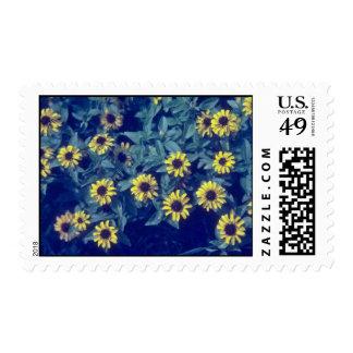 yellow Creeping Zinia (Sanvitlia Procumbens) flowe Postage Stamp
