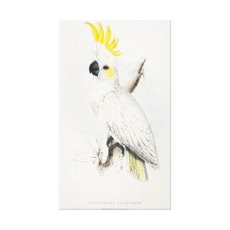 Yellow Crested Cockatoo Canvas Print