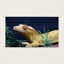 Yellow Crested Gecko Resting