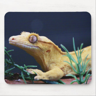 Yellow Crested Gecko Resting Mouse Pad