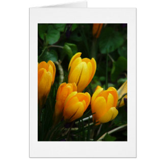 Yellow Crocus Card