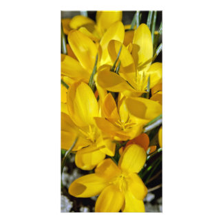 Yellow Crocus Flowers Card