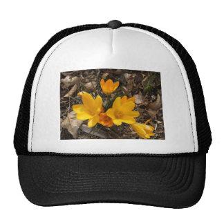 Yellow Crocus Trucker Hat