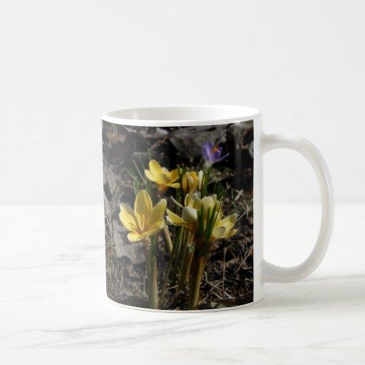 Yellow Crocus mug
