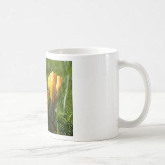 Yellow Crocuses Mugs
