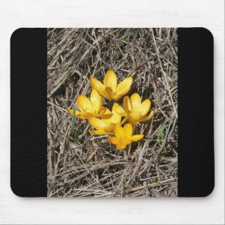 Yellow Crokus Crokus Vern Mouse Pad