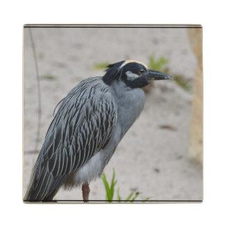 Yellow Crowned Night Heron Bird Maple Wood Coaster