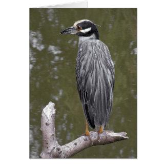 Yellow-crowned Night Heron Cards