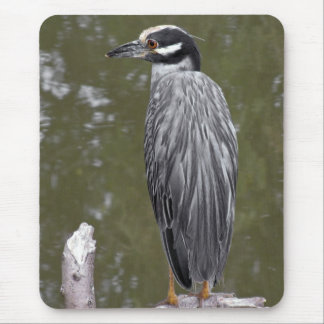 Yellow-crowned Night Heron Mouse Pad