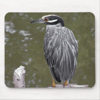Yellow-crowned Night Heron Mouse Pads