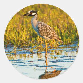Yellow-Crowned Night-Heron (Nyctanassa Violacea) Classic Round Sticker